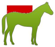 Pferdedecke messen